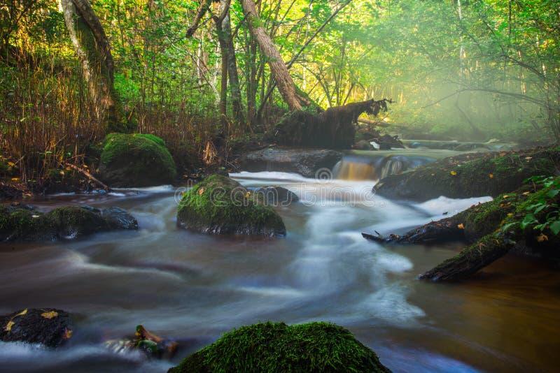 Petit écoulement de rivière dans la forêt images libres de droits