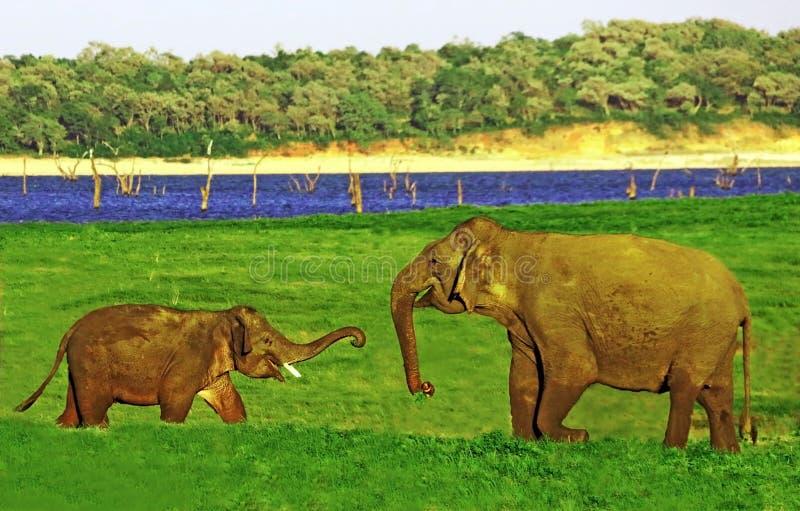 petit éléphant et papa de bébé parlant heureusement photos stock