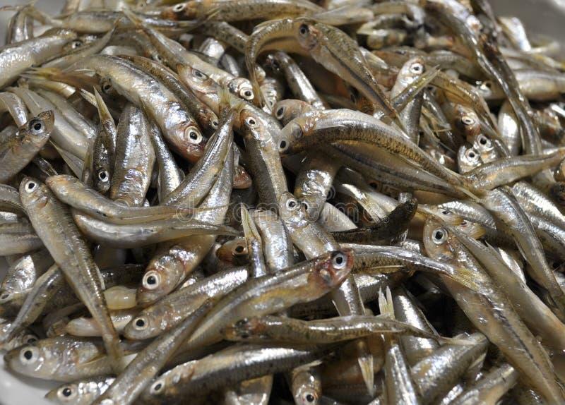 Petit éperlan de sable de Grand-échelle de poissons images libres de droits