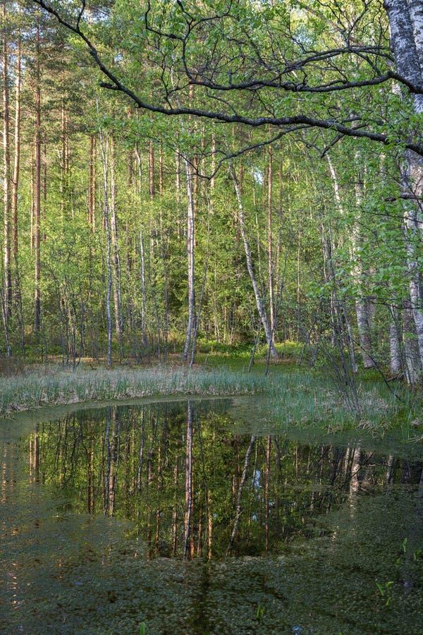 Petit étang dans une forêt photo stock