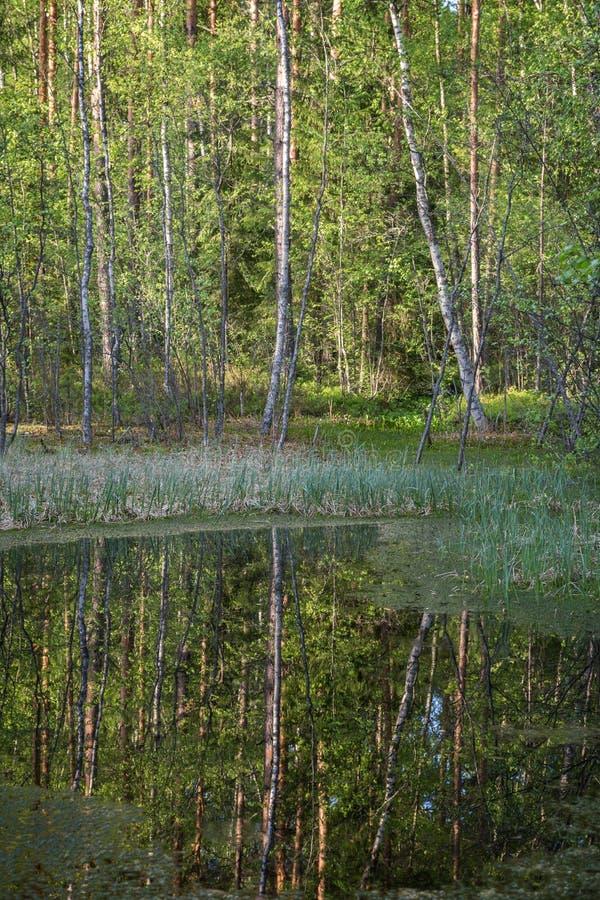 Petit étang dans une forêt photos libres de droits