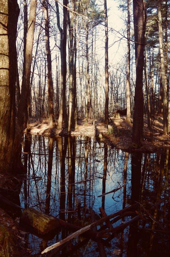 Petit étang en bois reflétant le ciel bleu, l'eau, étang de fée de fairie photographie stock libre de droits