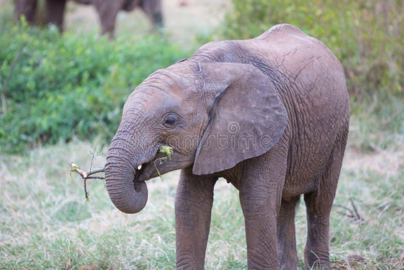 Petit animal d'éléphant photos stock