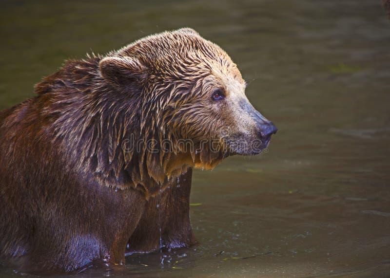 Petit animal d'ours images libres de droits