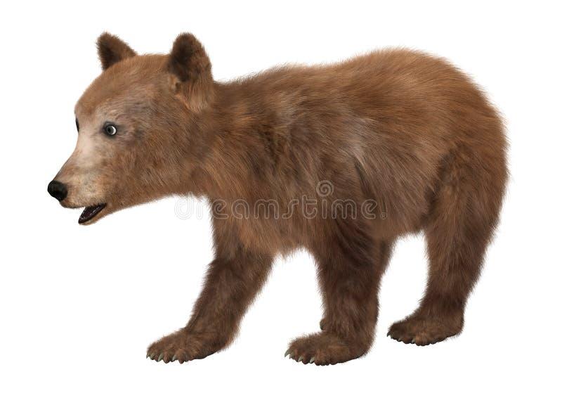 petit animal d 39 ours de brown illustration stock illustration du mignon observation 61023800. Black Bedroom Furniture Sets. Home Design Ideas