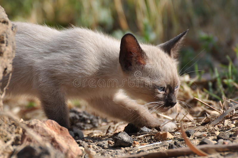 Petit animal de chat image stock