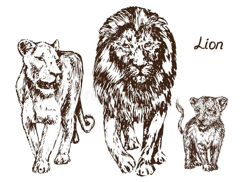 Petit animal de lion, de lionne et de lion, famille illustration libre de droits