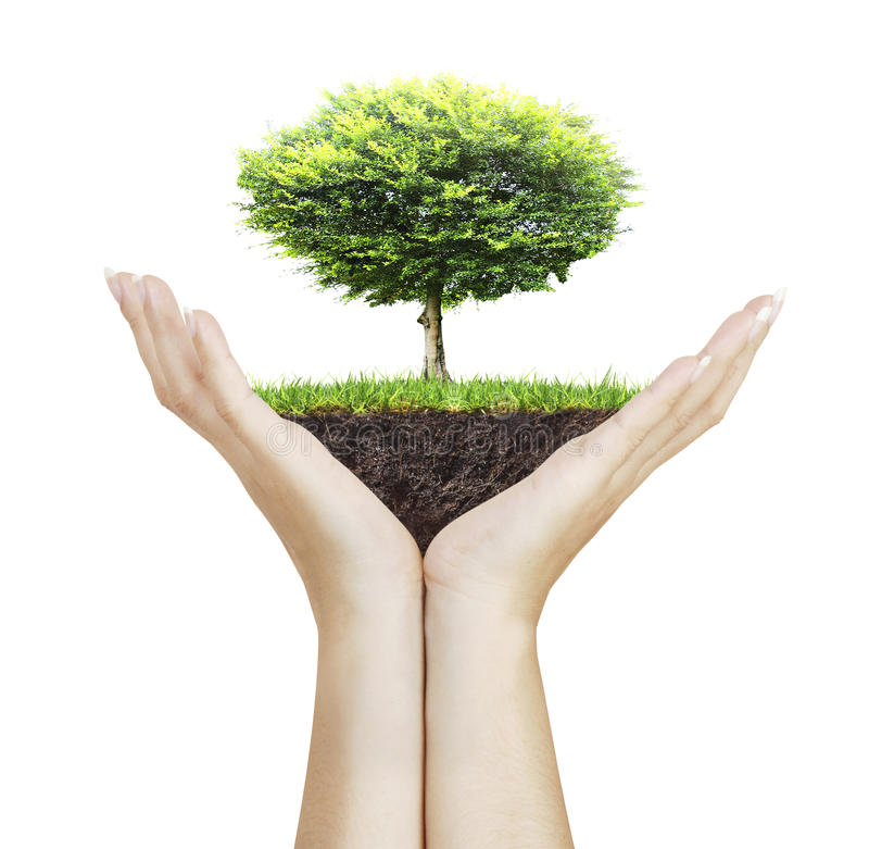 Petit arbre à disposition image libre de droits