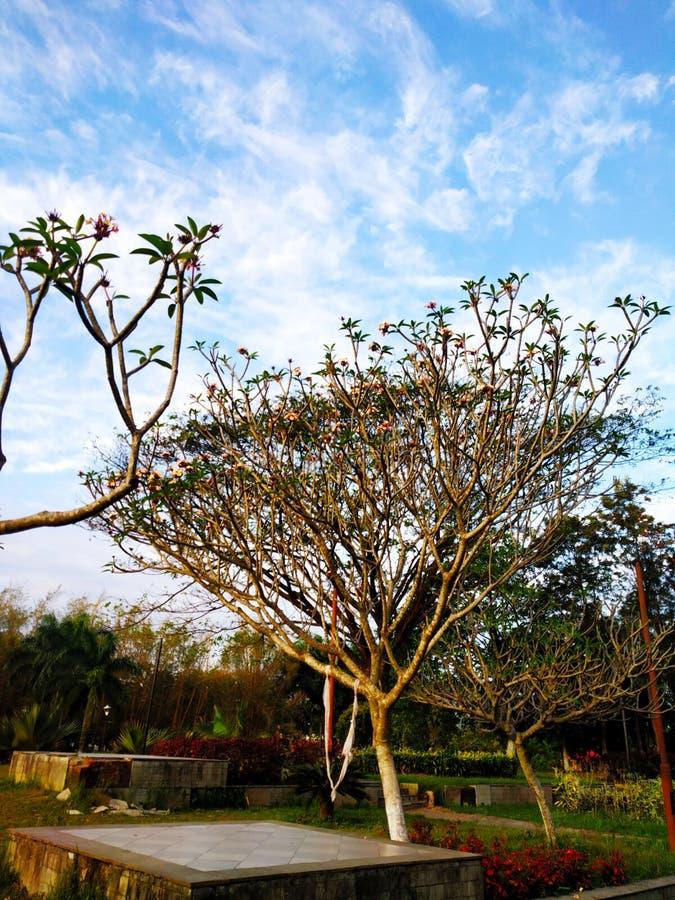 Petit arbre à l'arrière-plan de parc et de ciel bleu images libres de droits
