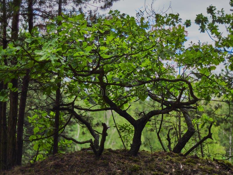 Petit arbre arrêté dans la forêt photo stock