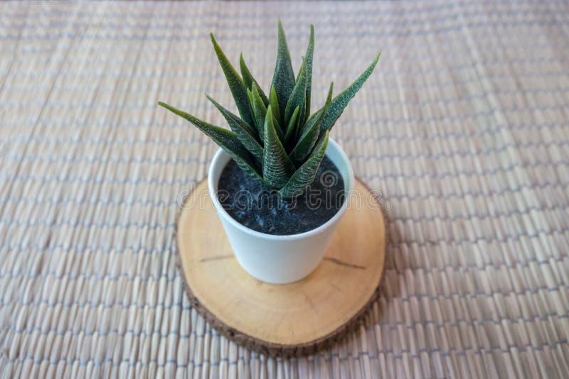 Petit arbre artificiel dans le pot blanc sur le support en bois de tronc photos libres de droits