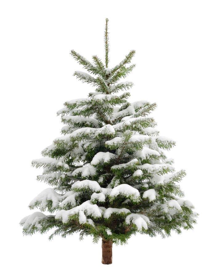 Petit arbre de Noël parfait dans la neige photographie stock libre de droits