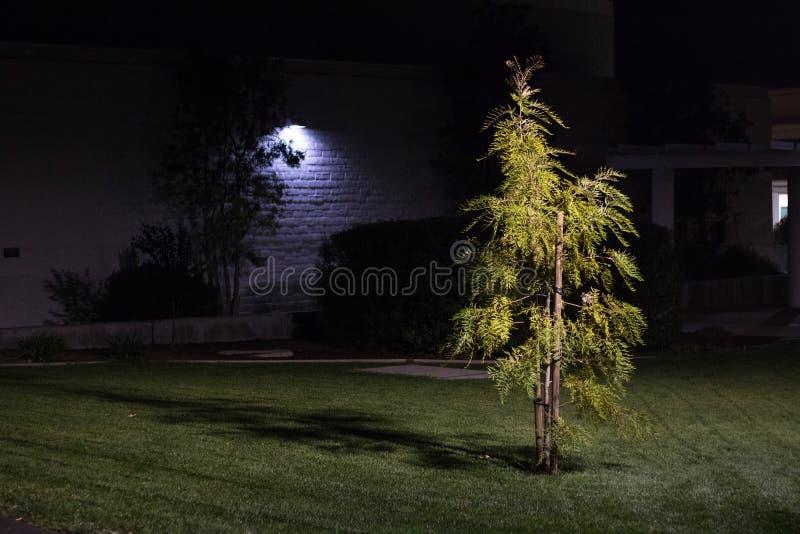 Petit arbre lumineux la nuit dans la zone urbaine image libre de droits