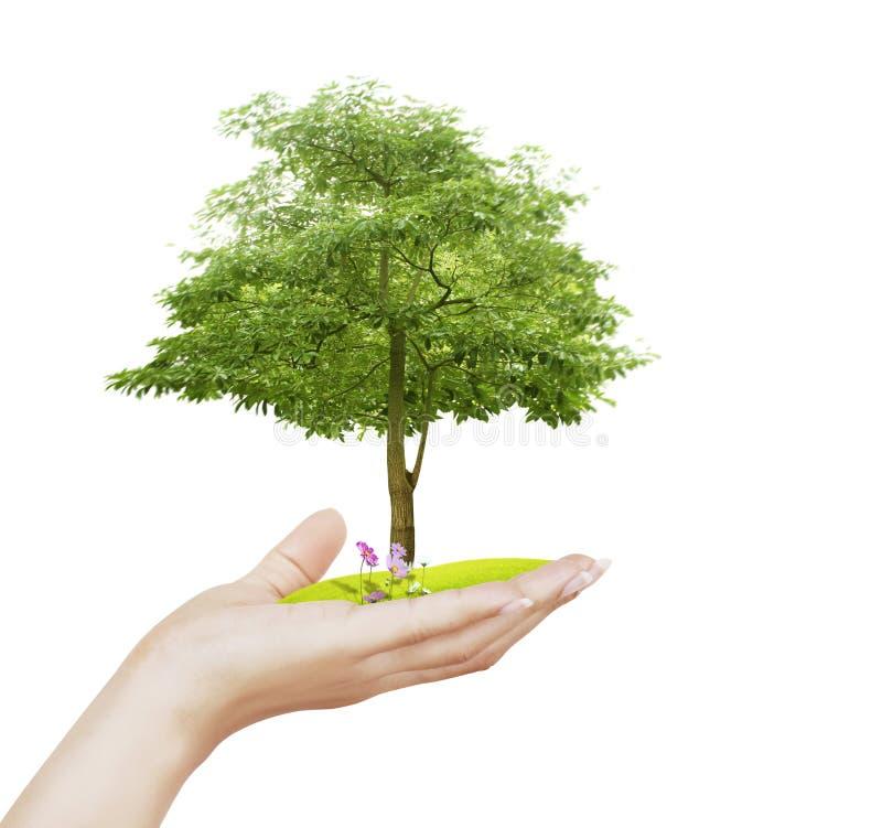 Petit arbre, usine à disposition photo stock