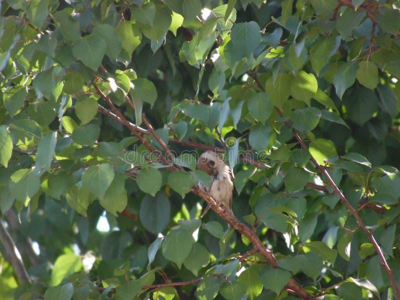Petit bel oiseau photo stock