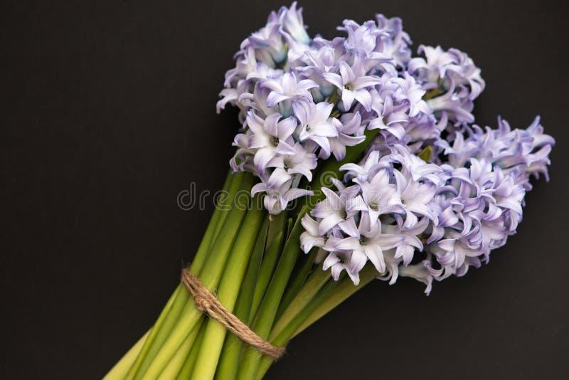Petit bouquet des jacinthes bleues de fleurs de ressort sur un fond foncé avec l'espace de copie images libres de droits