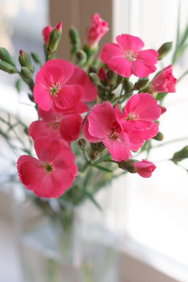 Petit bouquet des oeillets roses lumineux dans le vase en verre photos stock