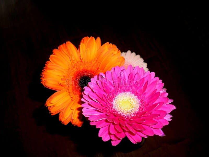 Petit bouquet lumineux comme signe de tendresse et d'amitié photographie stock libre de droits
