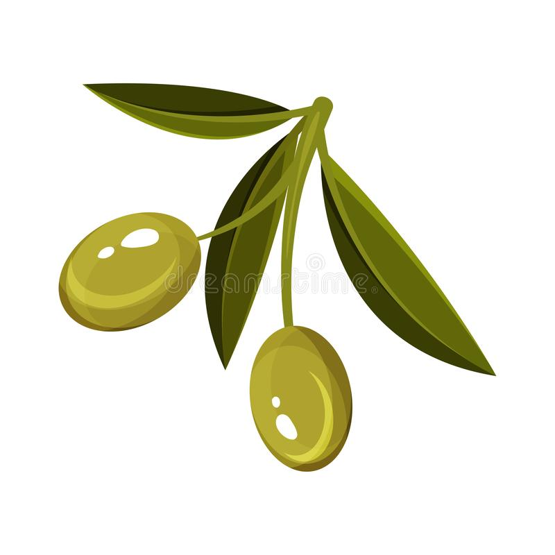 Petit brin avec les feuilles vertes et deux olives mûres Aliment biologique Produit naturel Conception plate de vecteur illustration stock