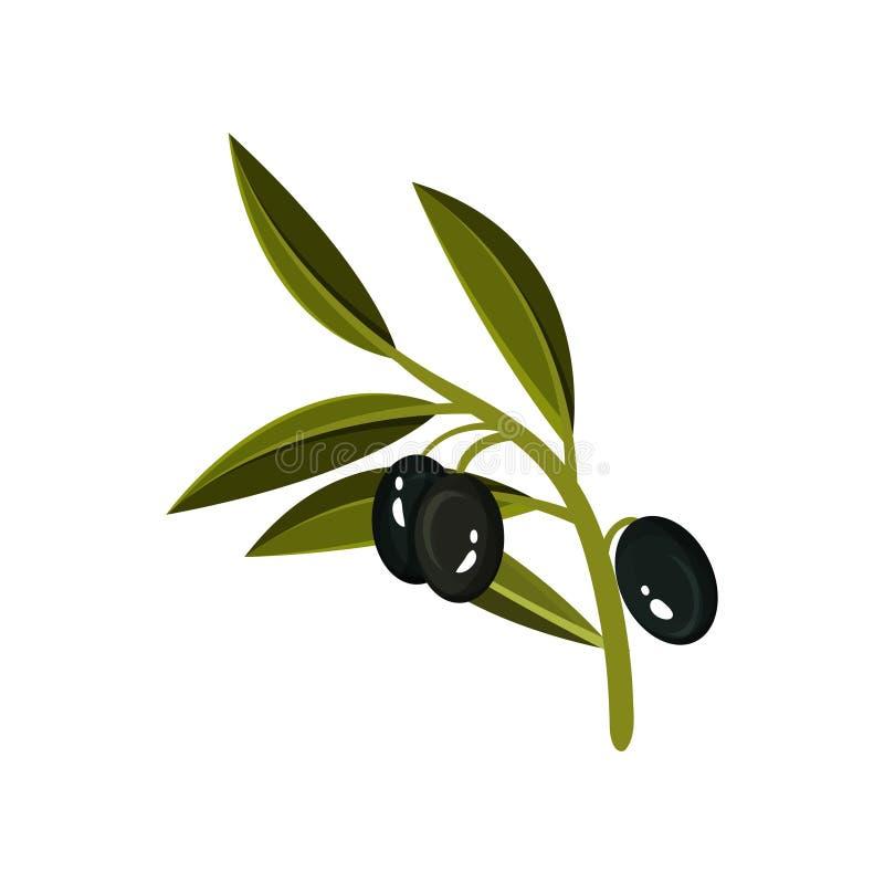 Petit brin avec trois olives noires et feuilles vertes Produit organique et sain Icône plate de vecteur illustration libre de droits