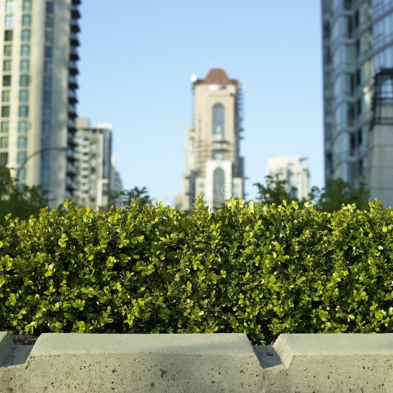 Petit buisson devant la ville image stock