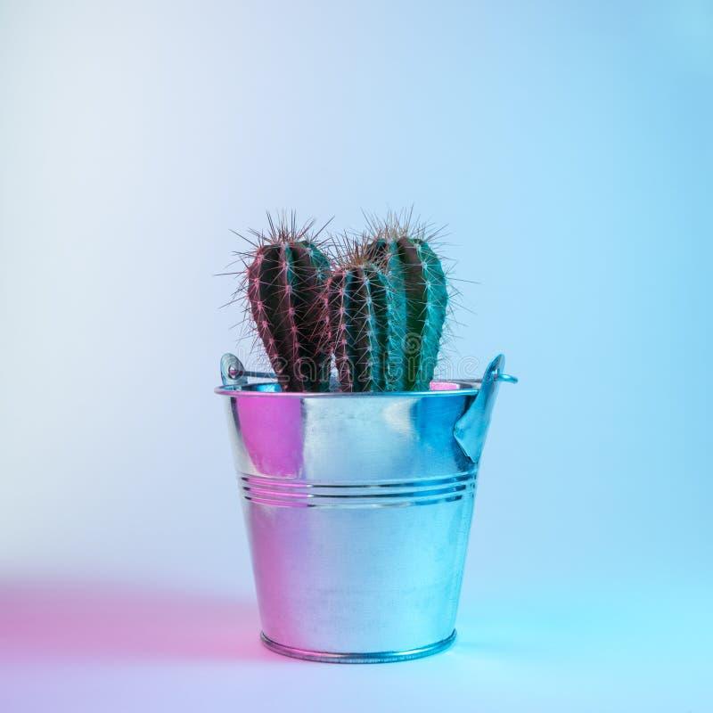 Petit cactus dans des couleurs olographes de gradient audacieux vibrant Concept minimal d'art de Noël et de nouvelle année photo stock