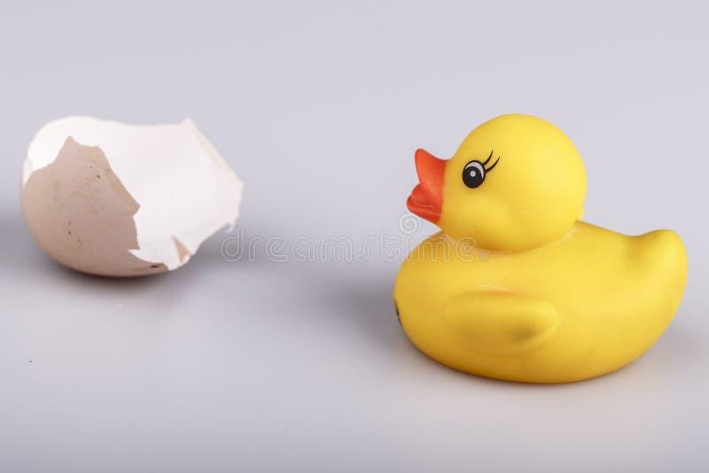 Petit canard en plastique jaune avec l'oeuf d'isolement image libre de droits