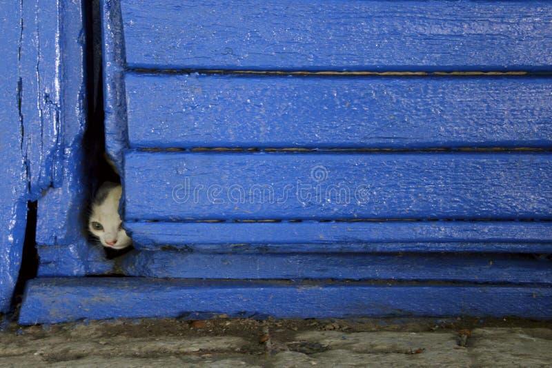 Petit chat égaré effrayé, tir vertical image stock