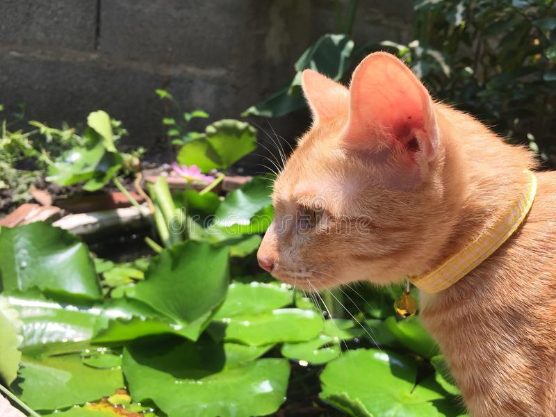 Petit chat photos libres de droits