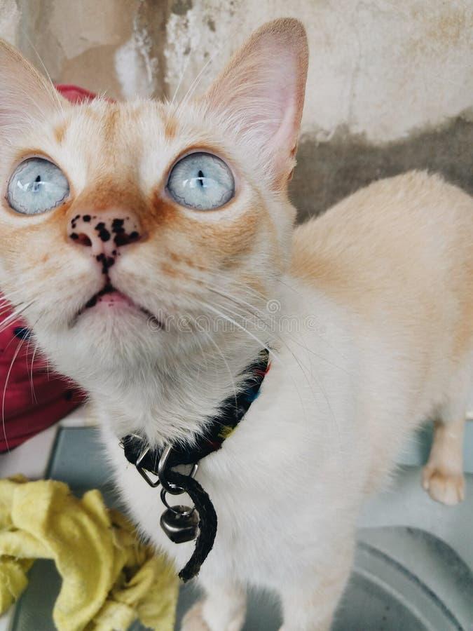 Petit chat photographie stock