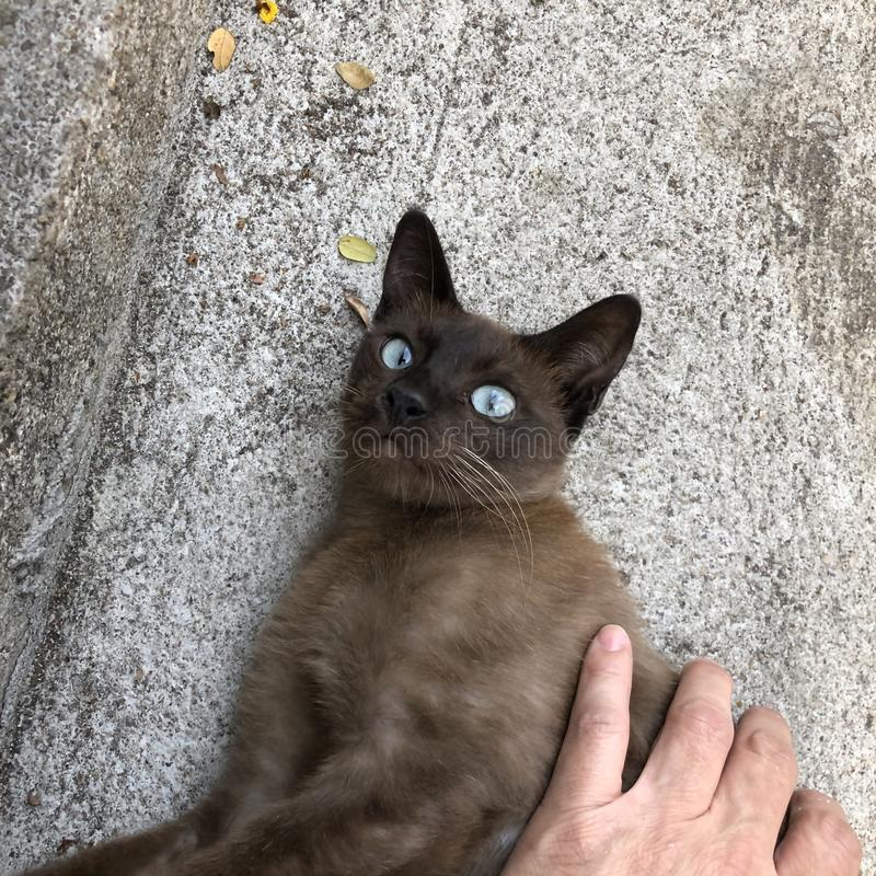 Petit chat brun dans le parc images stock