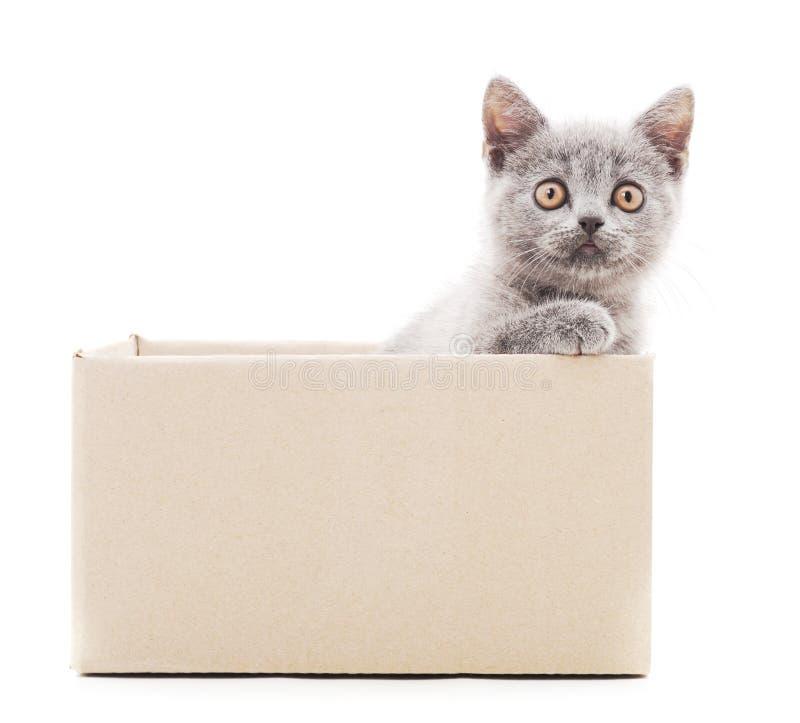 Petit chat dans la bo?te photo libre de droits