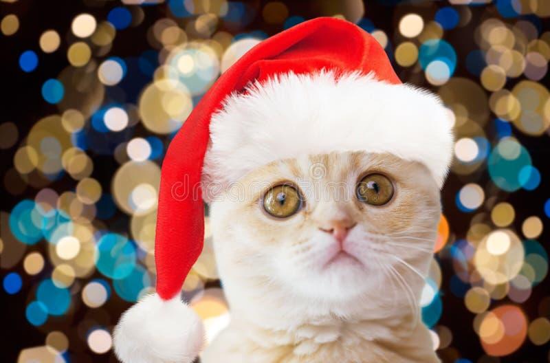 Petit chat dans le chapeau de Santa au-dessus des lumières de Noël photos stock