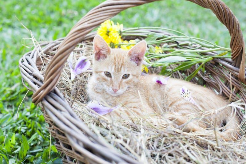 Petit chat dans le panier en osier images stock