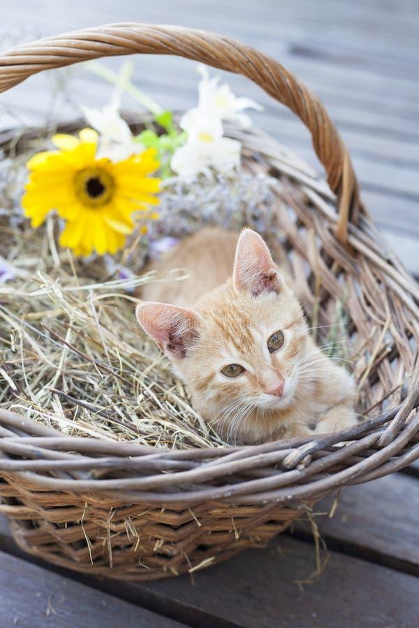 Petit chat dans le panier en osier images libres de droits