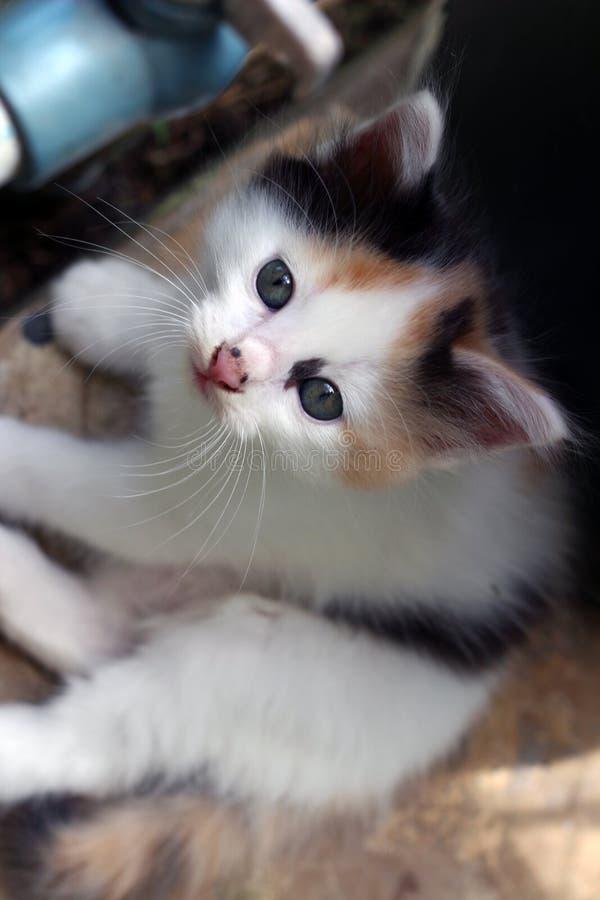 Petit chat dans mon arrière-cour 3 photographie stock libre de droits