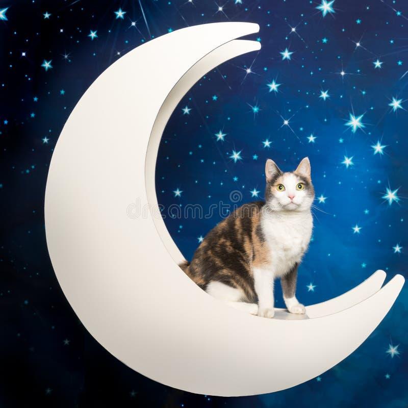 Petit chat domestique multicolore à la lune à l'arrière-plan étoilé photo stock