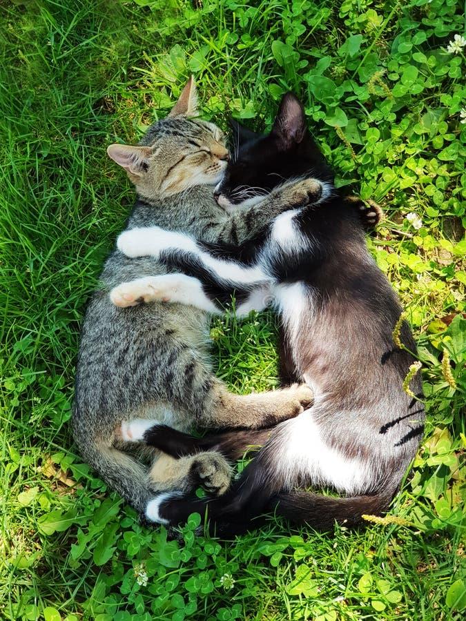 Petit chat mignon, chatons extérieurs, jouer de chats drôle et beau photographie stock libre de droits