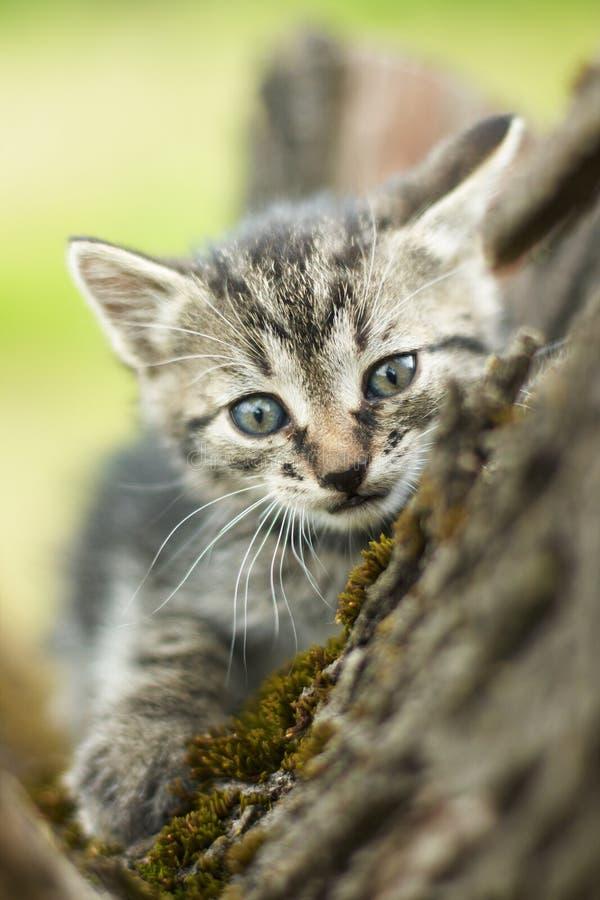 Petit chat mignon curieux photo libre de droits