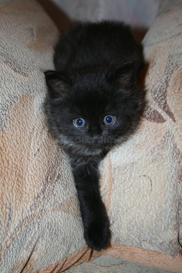 Petit chat noir drôle photo stock