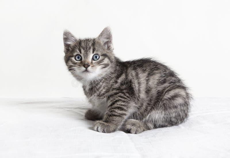Petit chat rayé images libres de droits