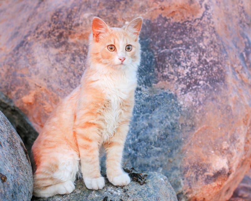 Petit chat rouge se reposant sur une grande pierre photos stock