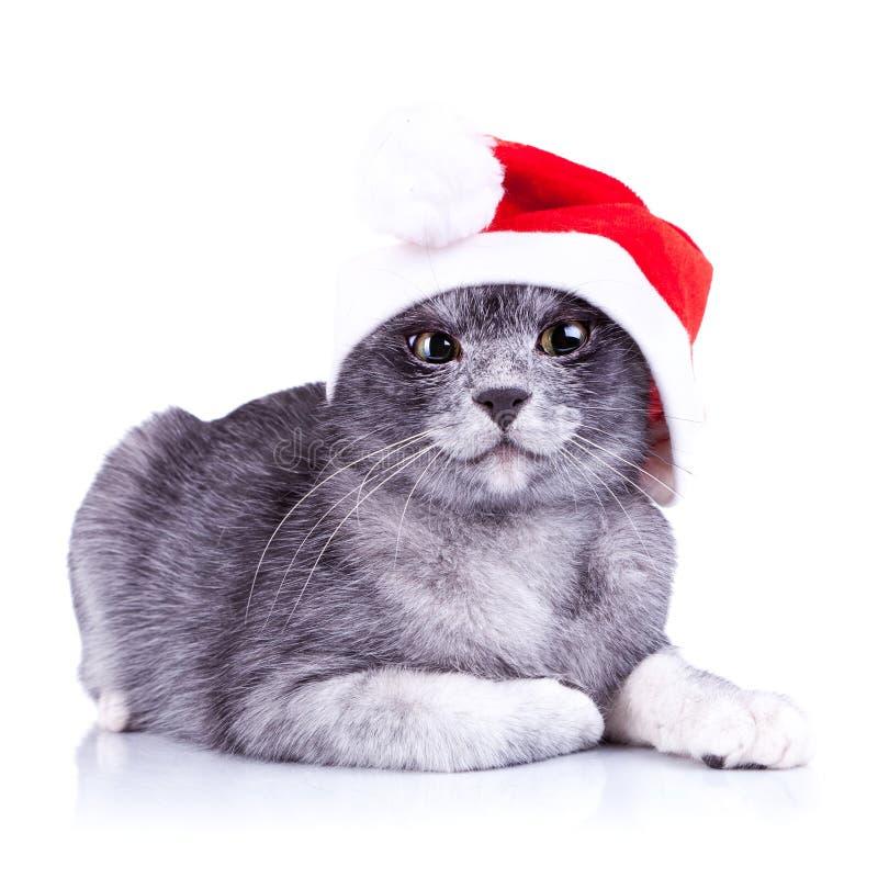 Petit chat soupçonneux de Santa photos stock