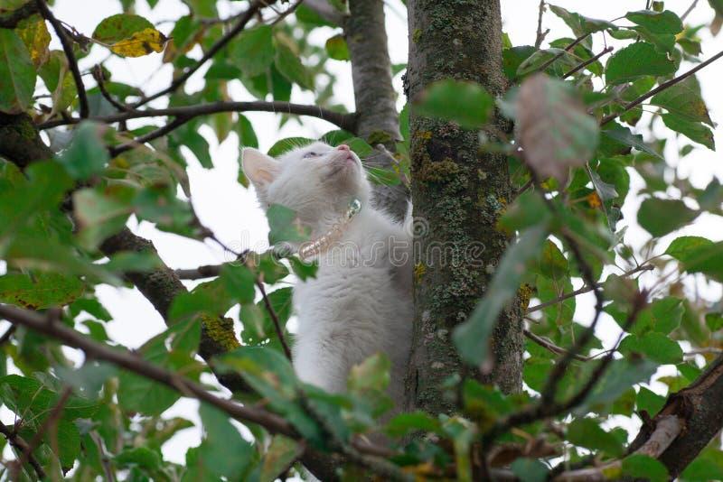 Petit chat sur le plan rapproch? d'arbre photo libre de droits