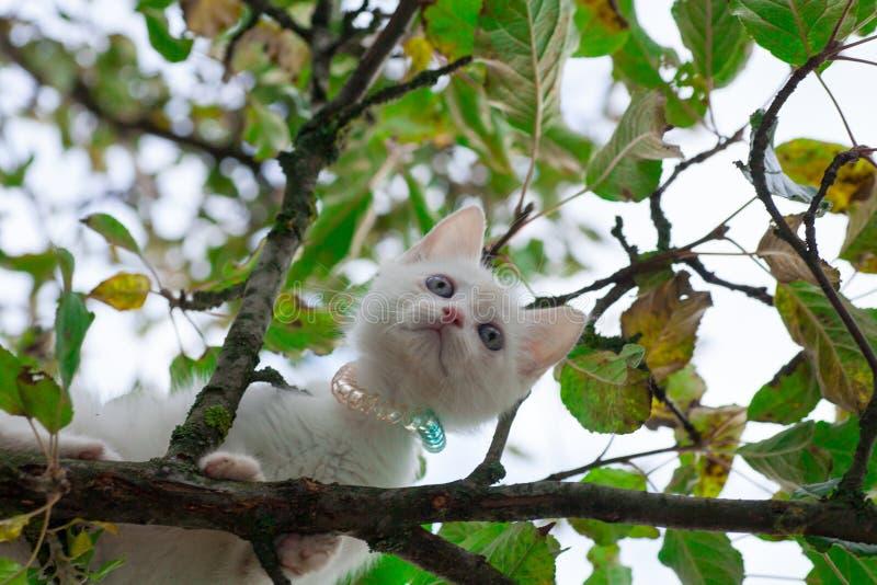 Petit chat sur le plan rapproch? d'arbre photographie stock libre de droits