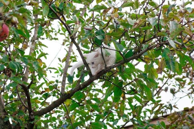 Petit chat sur le plan rapproch? d'arbre image stock