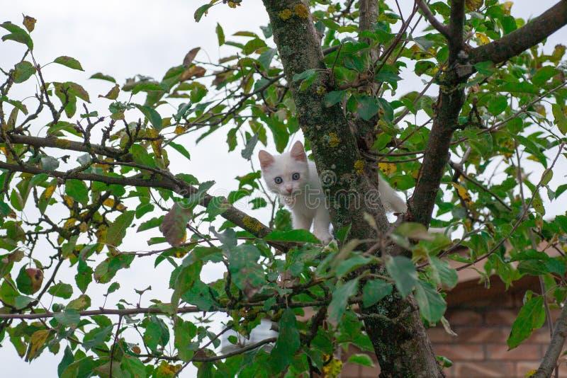 Petit chat sur le plan rapproch? d'arbre photo stock