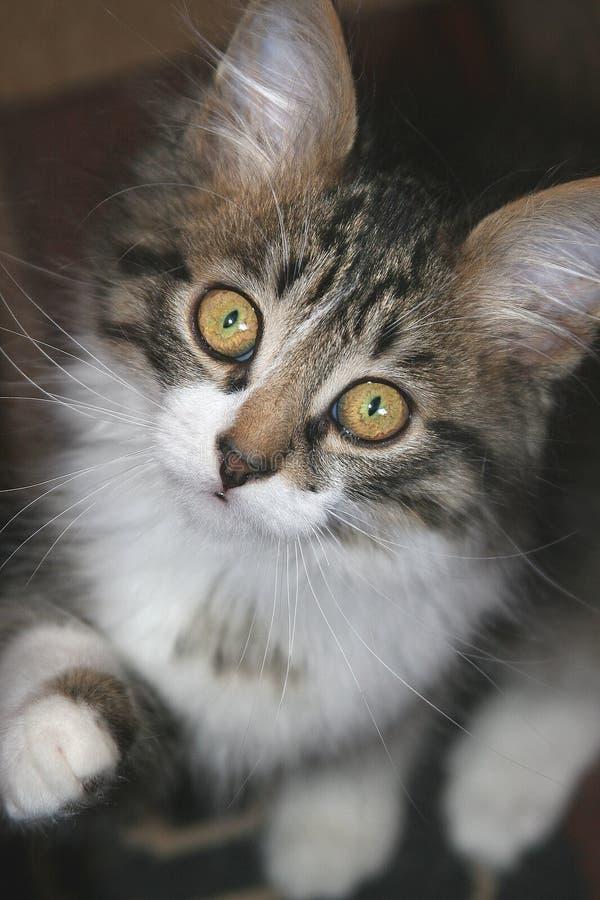 Petit chaton. photographie stock libre de droits