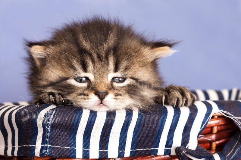 petit chaton images stock