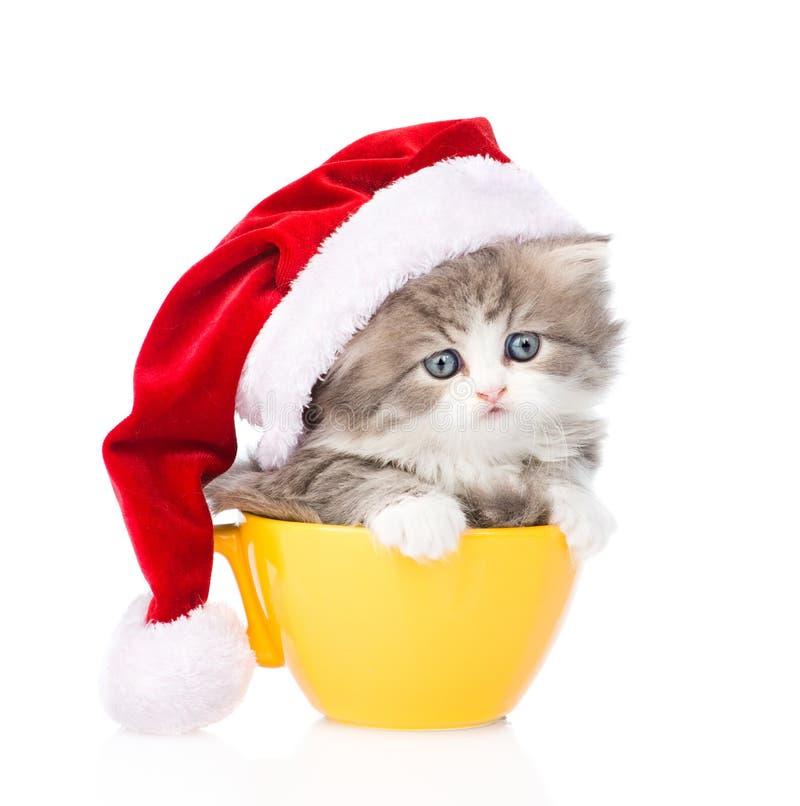 Petit chaton avec le chapeau rouge dans la grande tasse sur le blanc photos stock